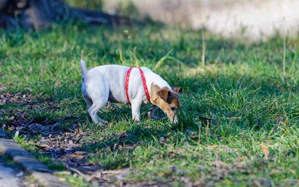 dog scent training