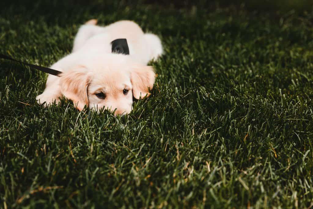 dog scent games