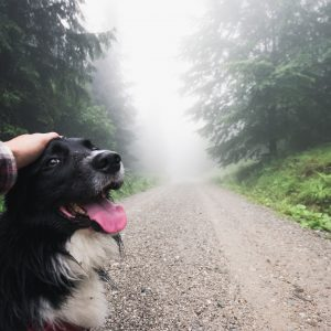 11 Dog Walking Tips for a Stress-Free Walk