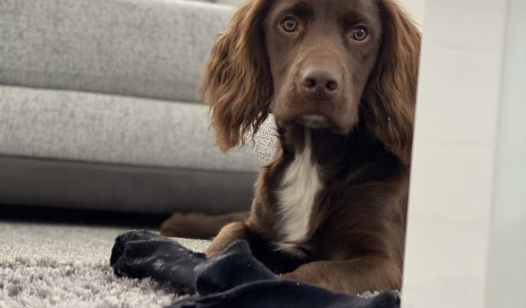 Puppy Separation Anxiety: How to Teach a Clingy Pooch Love Their Own Company