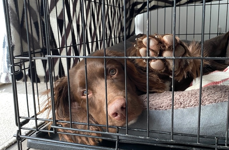 crate training for separation anxiety