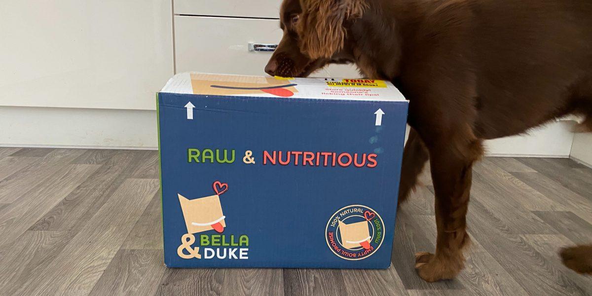 bella and duke review