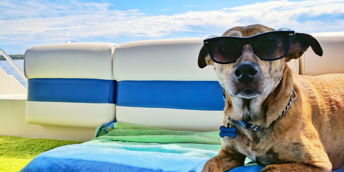 how to care for dogs in summer