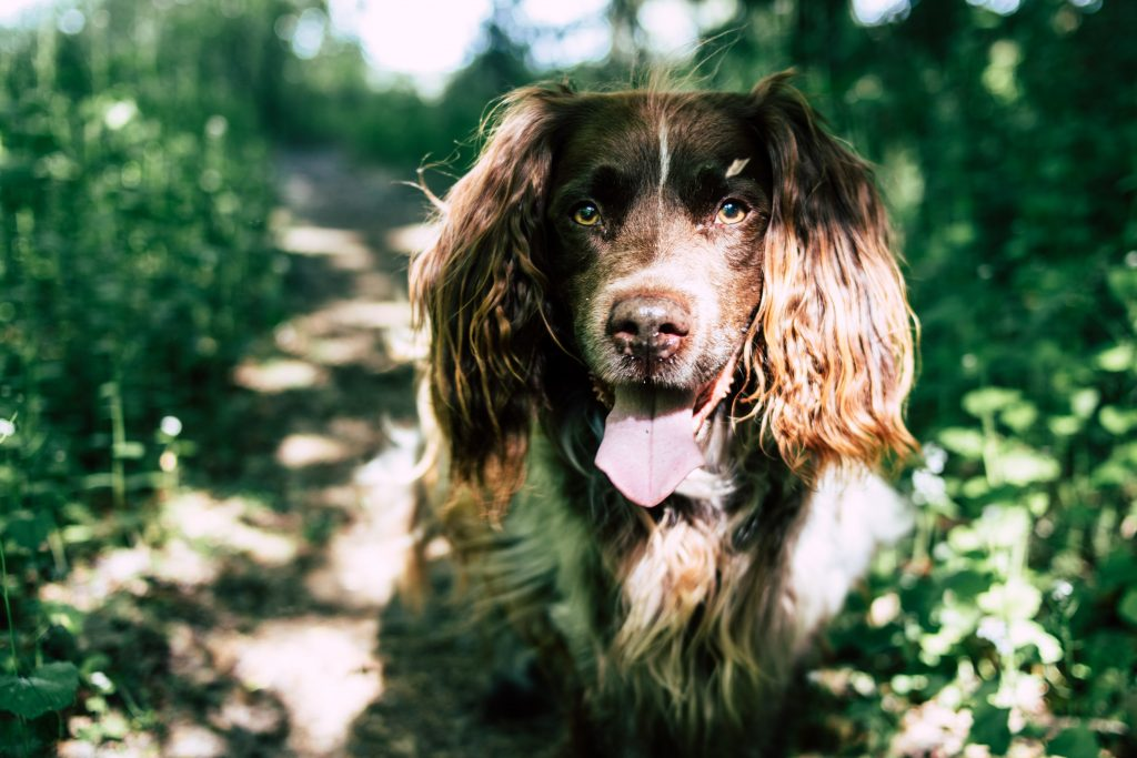 how to stop spaniel puppy biting